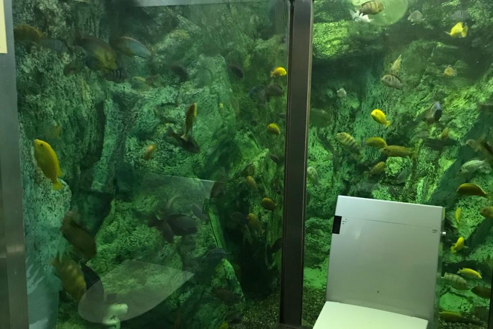 ヒポポパパの水族館トイレ