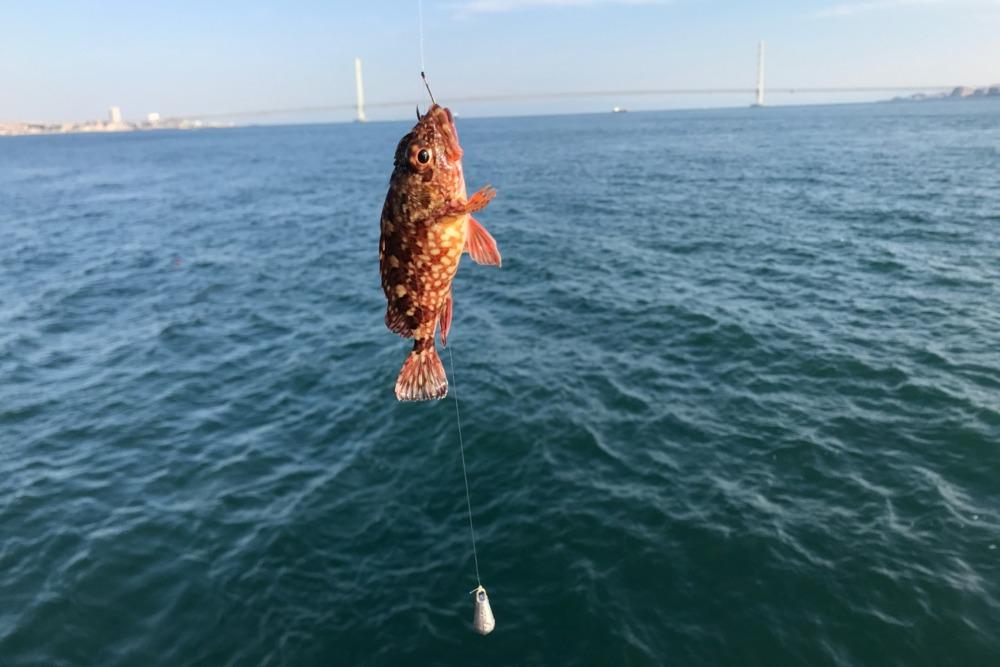 16時3分に1匹目のガシラが釣れた